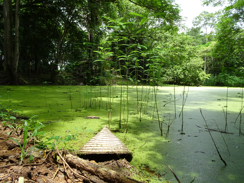 Green Swamp thing