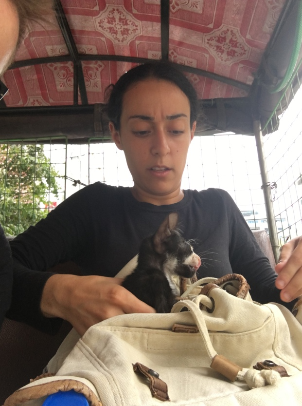 As you can see, the cat is uncomfortable in the tuk tuk and Shalma is incredibly concerned