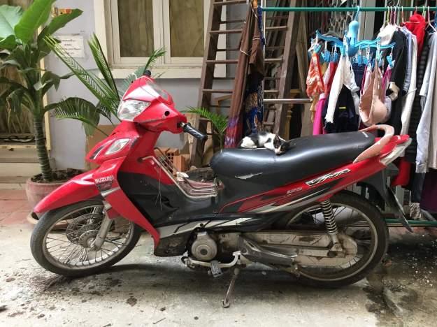 Scruffles motorbike
